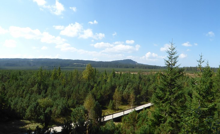 To see animals and mud in the Bohemian Forest